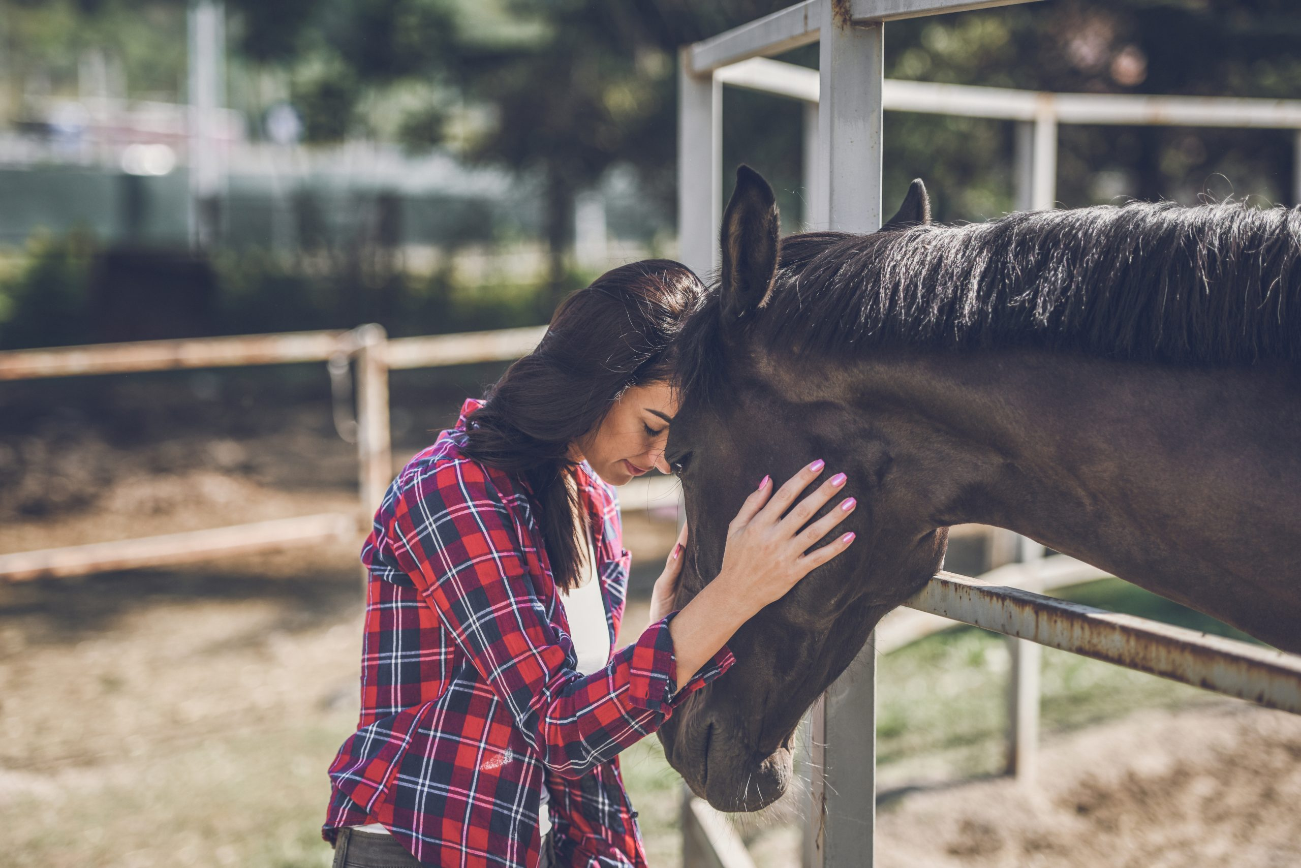 Why Horses Should Be a Part of Your Life